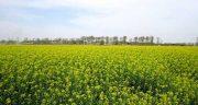 تعبیر خواب زمین کشاورزی ، معنی دیدن زمین کشاورزی در خواب های ما چیست
