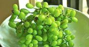 تعبیر خواب خوردن غوره انگور ، معنی خوردن غوره انگور در خواب ما چیست
