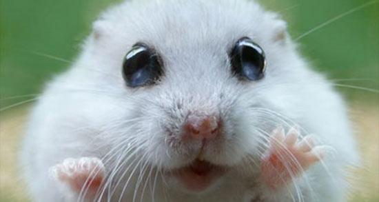 تعبیر خواب موش و مار چیست ، معنی دیدن موش و مار در خواب های ما چیست