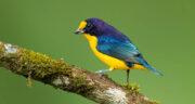 تعبیر خواب پرنده آبی رنگ ، معنی دیدن پرنده آبی رنگ در خواب های ما چیست