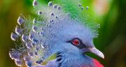 تعبیر خواب پرنده کوچک در دست ، معنی دیدن پرنده کوچک در دست در خواب