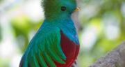 تعبیر خواب پرنده سبز ، معنی دیدن پرنده سبز در خواب های ما چیست