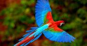 تعبیر خواب پرنده زیبا و رنگارنگ ، معنی دیدن پرنده زیبا و رنگارنگ در خواب چیست