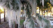 تعبیر خواب شکوفه درخت در زمستان ، معنی دیدن شکوفه درخت در زمستان در خواب