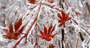 تعبیر خواب زمستان سرد ، معنی دیدن زمستان سرد در خواب های ما چیست
