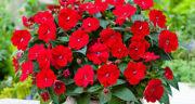 تعبیر خواب گل قرمز ، معنی دیدن گل قرمز در خواب های ما چیست
