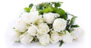 تعبیر خواب گل سفید ، معنی دیدن گل سفید در خواب های ما چیست