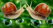 تعبیر خواب حلزون بدون لاک ، معنی دیدن حلزون بدون لاک در خواب های ما چیست