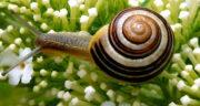 تعبیر خواب حلزون در خانه ، معنی دیدن حلزون در خانه در خواب های ما چیست