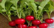 خواص تربچه ؛ در طب سنتی و بدنسازی و برای لاغری و دیابت و برگ تربچه