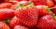 خواص توت فرنگی ؛ وحشی و خشک برای کودکان و لاغری و برگ توت فرنگی