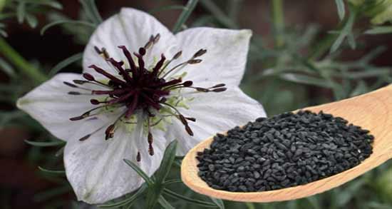 خواص سیاه دانه در دوران قاعدگی ؛ مصرف سیاه دانه برای کاهش درد قاعدگی