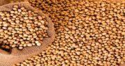 خواص سویا ؛ ماکارونی در بدنسازی و دانه سویا گوشتی برای مردان و لاغری