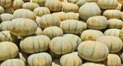 خواص طالبی ؛ در طب سنتی و بدنسازی برای کبد و قلب و کودکان و خشک شده