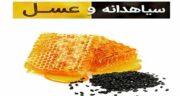 فواید سیاه دانه و عسل ؛ خواص ترکیب سیاه دانه پودر شده با عسل