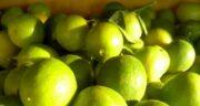 خواص لیمو ترش ؛ مضرات و فواید و عوارض لیمو ترش برای پوست صورت و کلیه