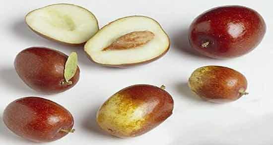 مقدار مصرف روزانه عناب ؛ در روز به چه میزانی می توان عناب خورد؟