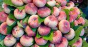 خواص هلو انجیری ؛ در بارداری و طب سنتی و برای جنین و طبع آن گرم است یا سرد