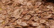 خواص گلپر ؛ و فشار خون و آویشن در طب سنتی برای کودکان و کلیه و کبد چرب و نفخ