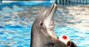 تعبیر خواب غذا دادن به دلفین ، معنی غذا دادن به دلفین در خواب های ما چیست