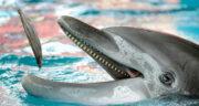 تعبیر خواب بچه دلفین ، معنی دیدن بچه دلفین در خواب های ما چیست