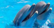تعبیر خواب بازی با دلفین ، معنی دیدن بازی با دلفین در خواب های ما چیست