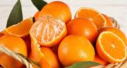 تعبیر خواب درخت نارنگی ، معنی دیدن درخت نارنگی در خواب های ما چیست