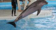 تعبیر خواب دیدن دلفین در آب ، معنی دیدن دلفین در آب در خواب های ما چیست
