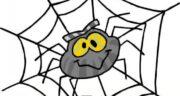 تعبیر خواب دیدن تار عنکبوت ، معنی دیدن تار عنکبوت در خواب های ما چیست