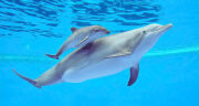 تعبیر خواب دلفین ابی ، معنی دیدن دلفین ابی در خواب های ما چیست