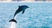 تعبیر خواب دلفین برای زن باردار ، معنی دیدن دلفین برای زن باردار در خواب چیست