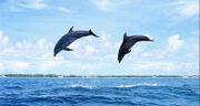 تعبیر خواب دلفین در آب ، معنی دیدن دلفین در آب در خواب های ما چیست