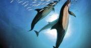 تعبیر خواب دلفین در خانه ، معنی دیدن دلفین در خانه در خواب های ما چیست