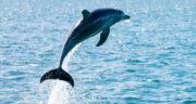 تعبیر خواب دلفین سیاه ، معنی دیدن دلفین سیاه در خواب های ما چیست