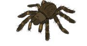 تعبیر خواب گرفتن تار عنکبوت ، معنی گرفتن تار عنکبوت در خواب های ما چیست