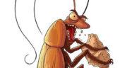 تعبیر خواب حشرات بزرگ ، معنی دیدن حشرات بزرگ در خواب های ما چیست