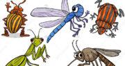 تعبیر خواب حشرات زیاد ، معنی دیدن حشرات زیاد در خواب های ما چیست