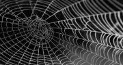 تعبیر خواب خانه پر از تار عنکبوت ، معنی دیدن خانه پر از تار عنکبوت در خواب