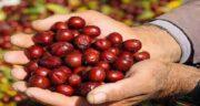خواص عناب برای کلیه ؛ آیا میوه عناب برای بیماری کلیوی مفید است؟