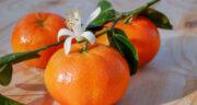 تعبیر خواب نارنگی برای زن باردار ، معنی دیدن نارنگی برای زن باردار در خواب