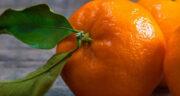تعبیر خواب نارنگی پوست کندن ، معنی نارنگی پوست کندن در خواب های ما چیست