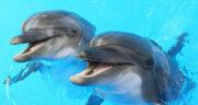 تعبیر خواب شکار دلفین ، معنی دیدن شکار دلفین در خواب های ما چیست