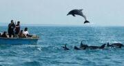 تعبیر خواب شنا با دلفین ، معنی دیدن شنا با دلفین در خواب های ما چیست