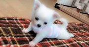 تعبیر دیدن توله سگ سفید در خواب ، معنی دیدن توله سگ سفید در خواب چیست