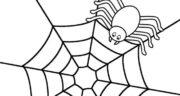 تعبیر خواب تار عنکبوت تو خونه ، معنی دیدن تار عنکبوت تو خونه در خواب ما چیست