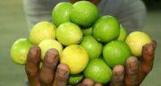 آب لیمو ترش و عسل ؛ لاغری و کاهش چربی و وزن و تناسب اندام با این ترکیب