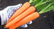 آب هویج در رژیم لاغری ؛ وزن متناسب و تناسب اندام و کاهش وزن