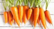 آب هویج و ریه ؛ بهبود بیماران ریوی و تنفس آسان تر