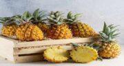 آناناس و جوش خوردن استخوان