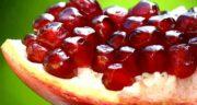انار برای سگ خوبه ؛ دادن میوه انار به سگ چه خواص و ضرری دارد